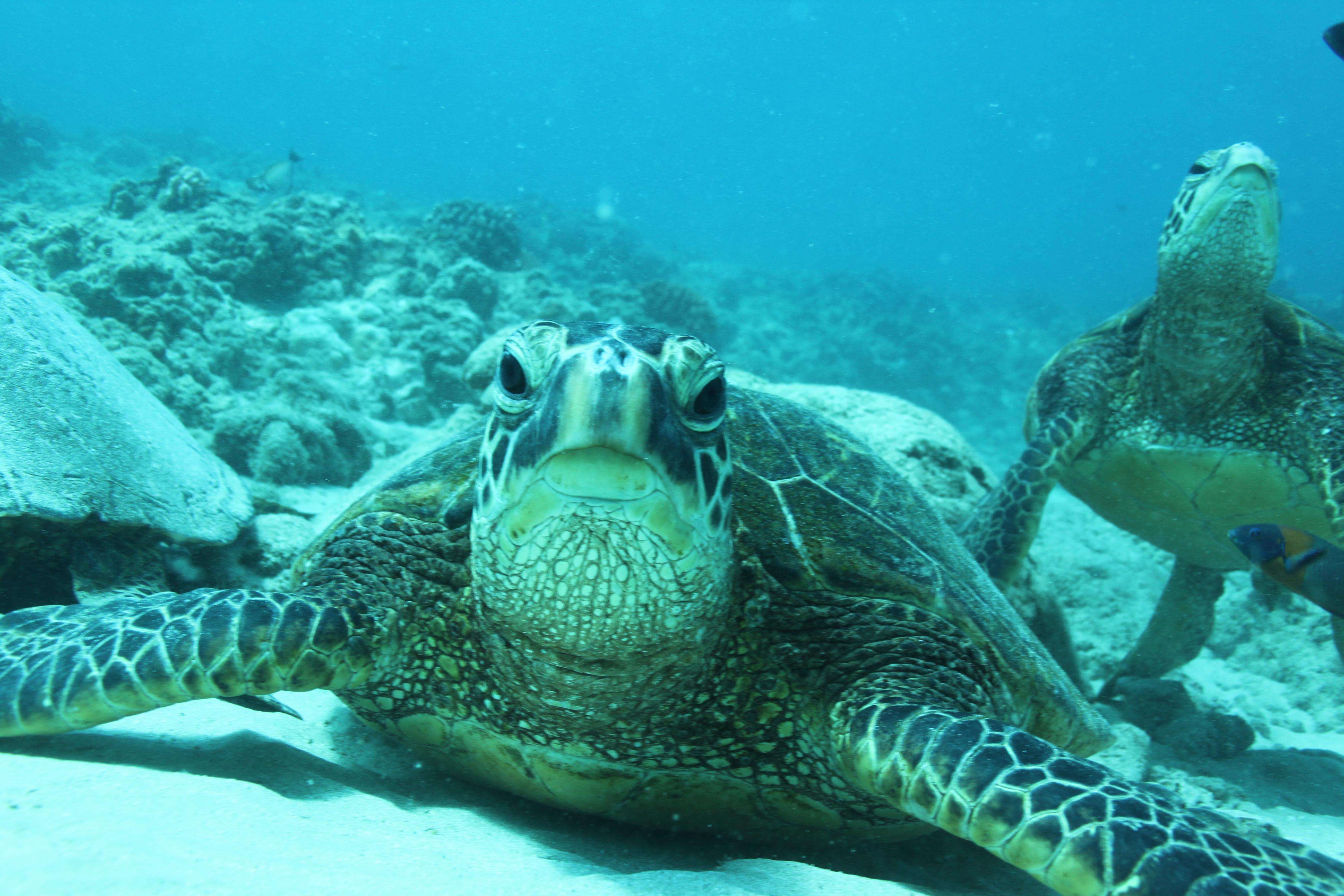 ハワイ旅行記③イルカ、カメと一緒に泳ぐ